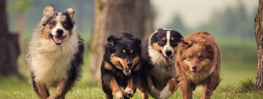 táplálékkiegészítő, kutya táplálék kiegészítő