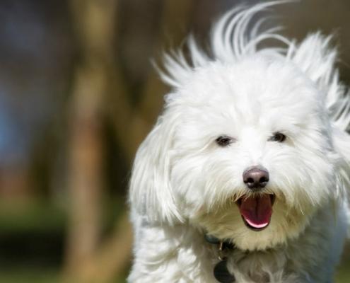 Kutya szénanátha, allergia