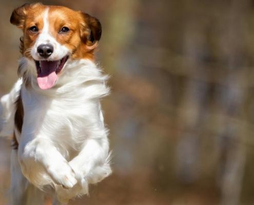 E-vitamin a kutyáknál, vitaminhiány, YuMEGA