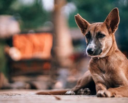 idos kutya, Lintbells