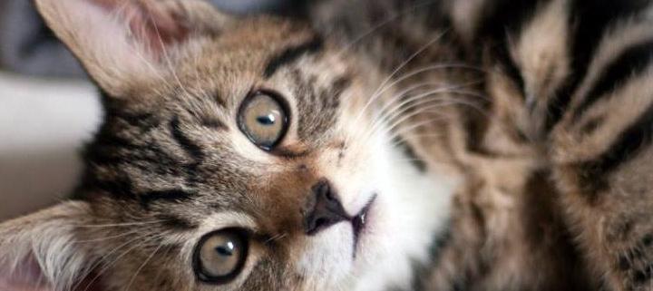 yumega cat táplálékkiegészítő