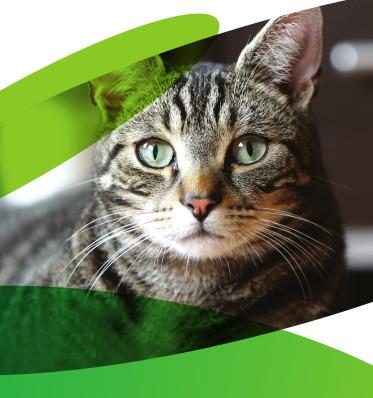 yumove CAT