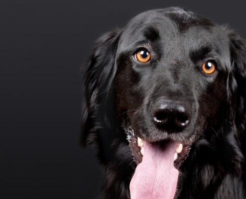 kutya szőr ápolása