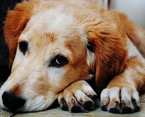 kutya öregedésének jelei