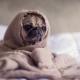 kutya ízületi betegségek, kutya-gyomorrontas