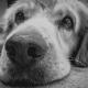 kutya ízület erősítő