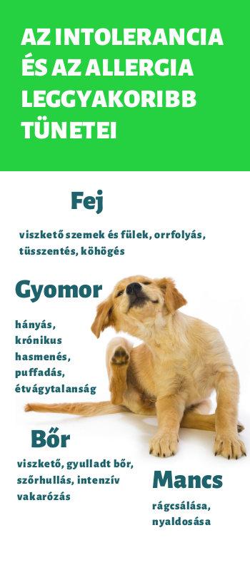 dogfit allergia teszt