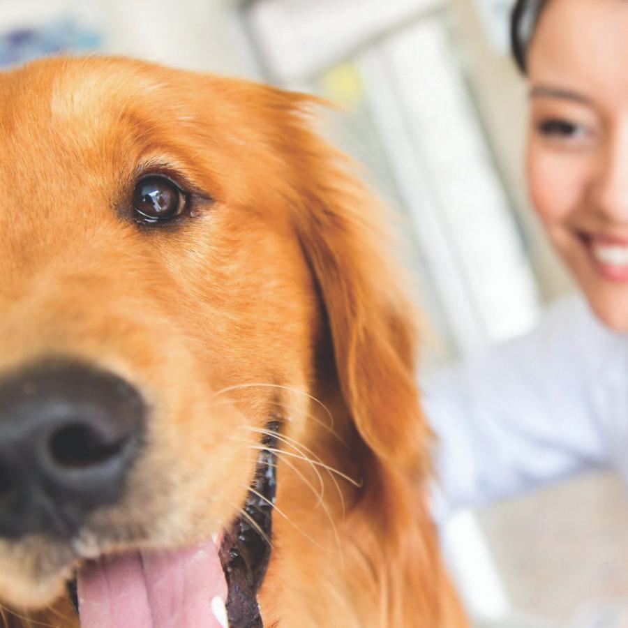 kutya allergia, intolerancia, dogfit