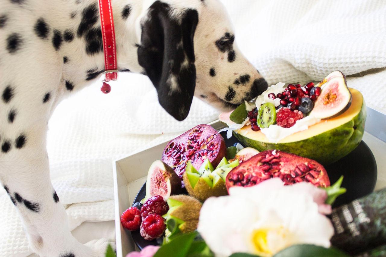 kutya ételallergia, allergén