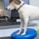 kutya fizioterápia