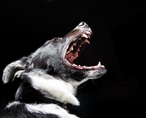 animal-bark-black-wallpaper-2238