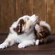 Vakarodzos-kutya