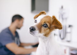 Kutya probiotikum