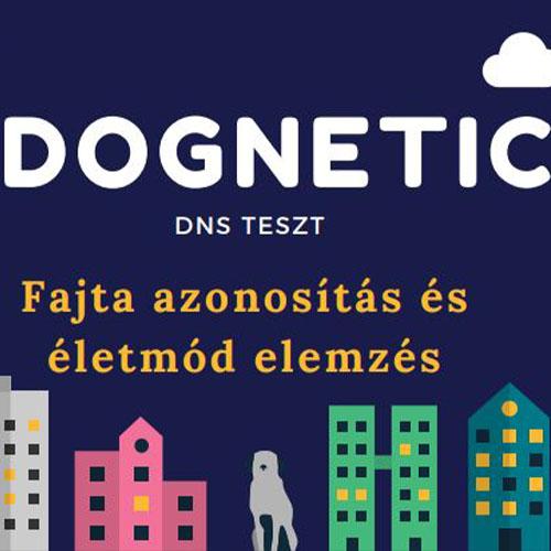 dognetic fajtaazonosító teszt